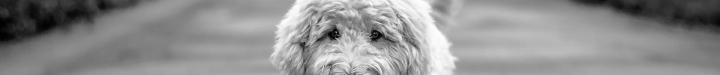 dog-1677041_1920